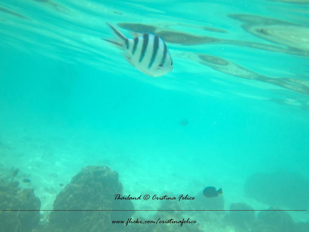 Ottalogo #14 Le otto cose da sapere sullo snorkeling 3
