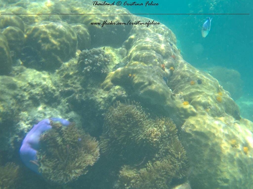 Ottalogo #14 Le otto cose da sapere sullo snorkeling